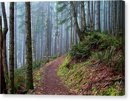 Into The Misty Forest Canvas Print