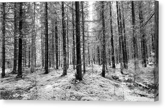 Into The Monochrome Woods Canvas Print