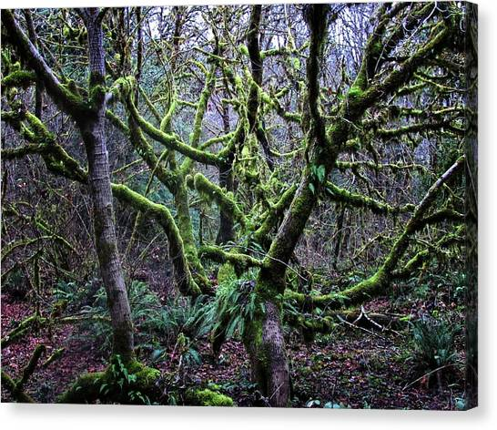Mossy Forest Canvas Print - Into The Mossy Forest by Katie Wing Vigil