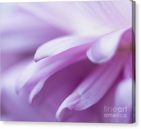 Into The Softness Canvas Print