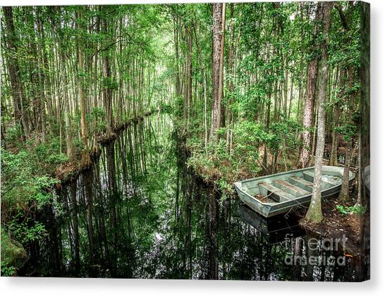 Okefenokee Canvas Print - Into The Swamp by Joan McCool