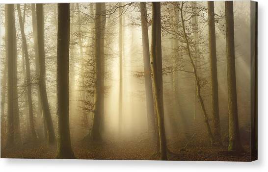 Into The Trees Canvas Print by Norbert Maier