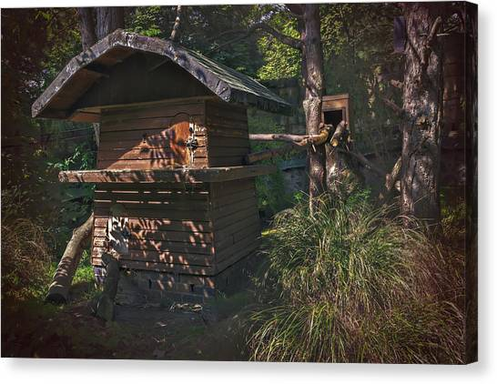 Sun Belt Canvas Print - Into The Woods by Carol Japp