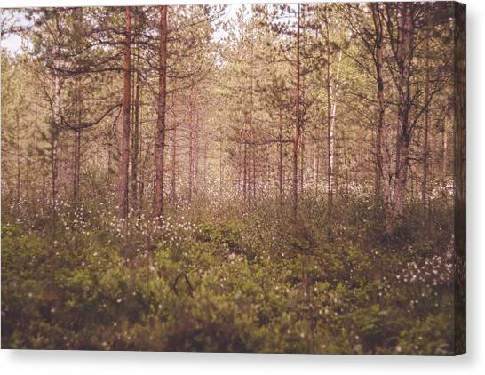 Canvas Print - Into The Woods by Jo Jackson