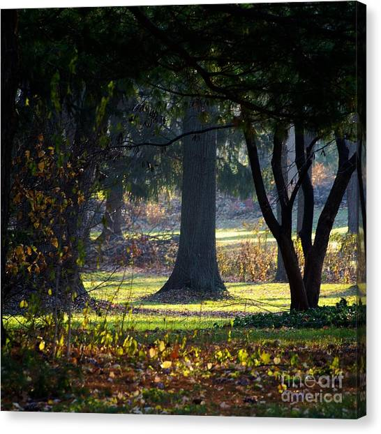 Intrigued By The Light Canvas Print