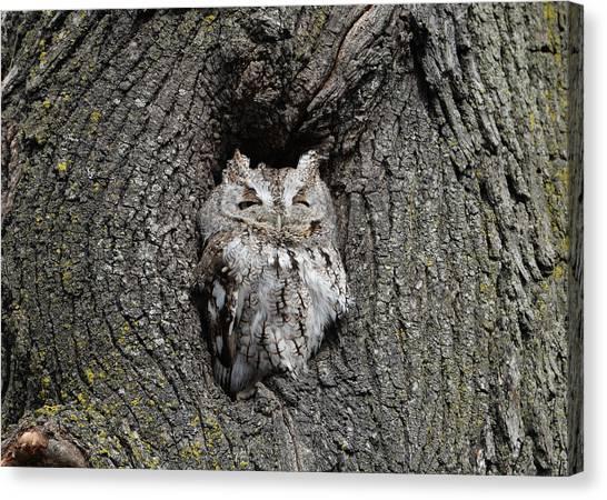 Invincible Screech Owl Canvas Print
