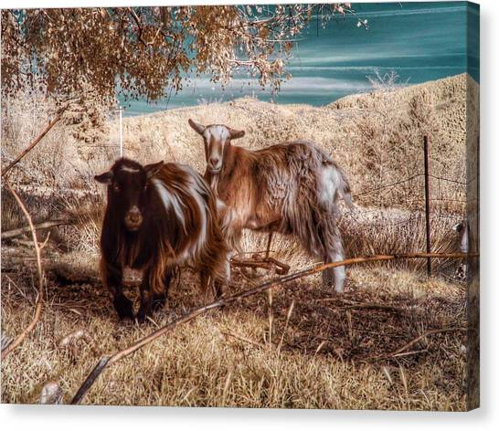 Canvas Print featuring the photograph Invisible Lives by Chriss Pagani