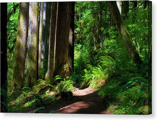 Inviting Hike Canvas Print