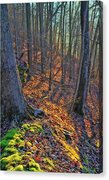 Mossy Forest Canvas Print - Inviting Morning Light In The Forest by Dan Sproul