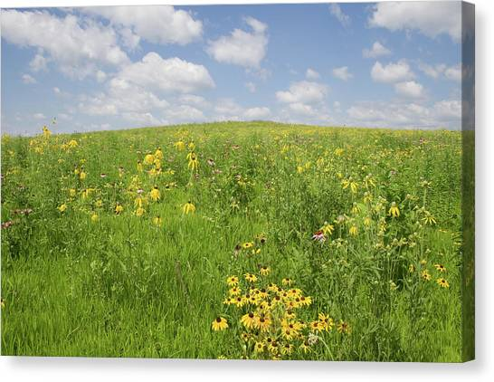 Canvas Print featuring the photograph Iowa Summer Flowers I by Dylan Punke