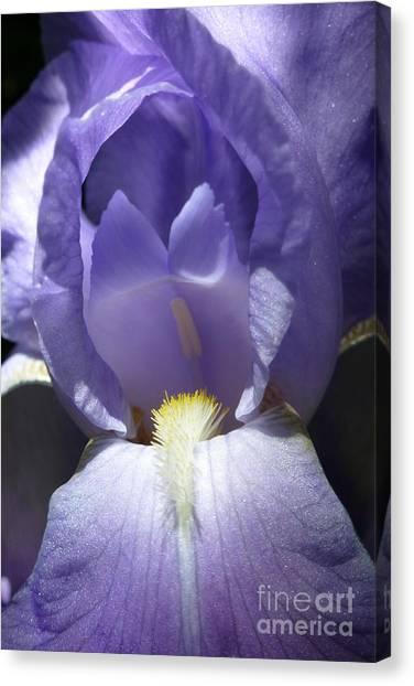 Iris 2 Canvas Print