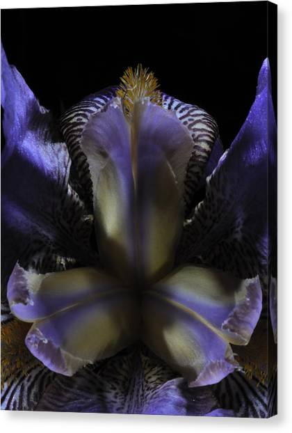 Iris Aglow Canvas Print