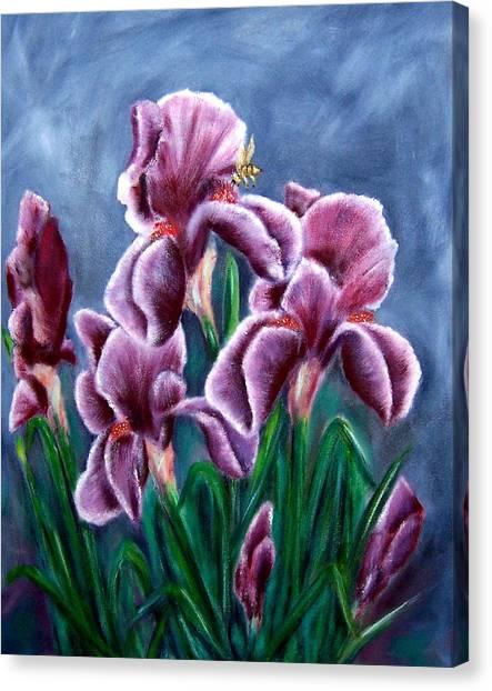 Iris Awakens Canvas Print by Penny Everhart
