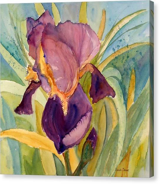 Iris Bloom Canvas Print