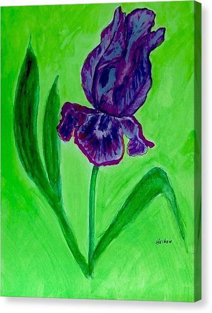 Iris Bloom Canvas Print by Marsha Heiken