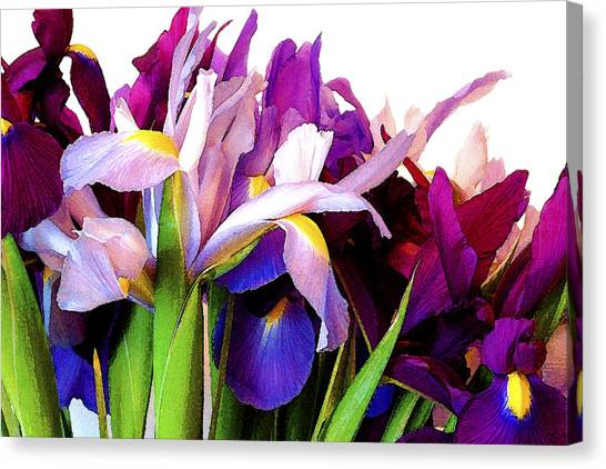 Iris Bouquet Canvas Print