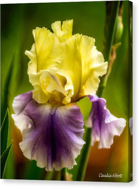 Canvas Print featuring the photograph Iris by Claudia Abbott