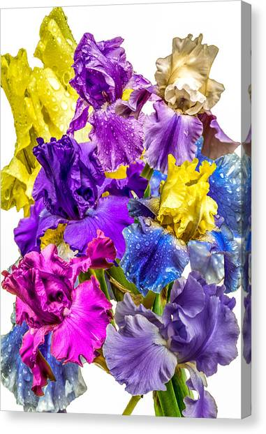 Canvas Print featuring the photograph Iris Collection by CAbbottPhotography