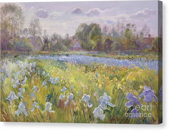 Blooming Tree Canvas Print - Iris Field In The Evening Light by Timothy Easton