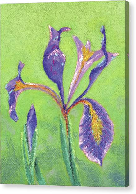 Iris For Iris Canvas Print