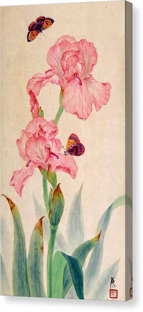 Iris IIi Canvas Print by Ying Wong
