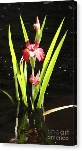 Iris In Water Canvas Print