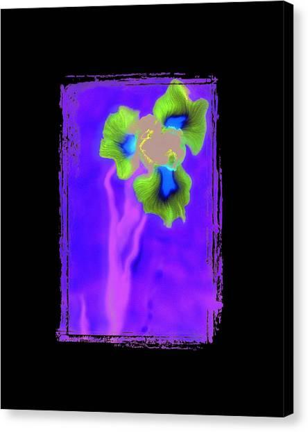 Iris Canvas Print by K Randall Wilcox