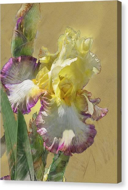 Iris, 'kiss Of Kisses' Canvas Print