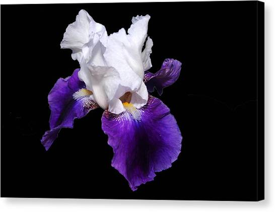 Iris Number One Canvas Print