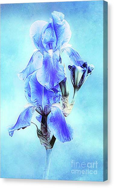 Iris Pair In Blue Canvas Print