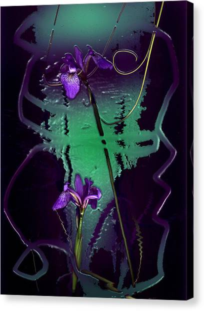 Iris Reflections Canvas Print by Algis Kemezys