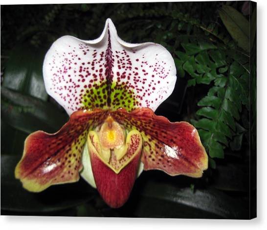 Iris Canvas Print by Sean Owens