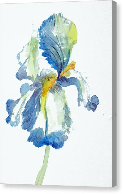 Iris Canvas Print by Tina Storey