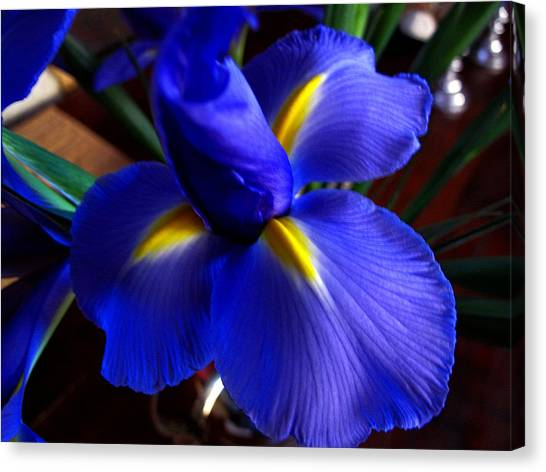 Iris Unfolding Canvas Print