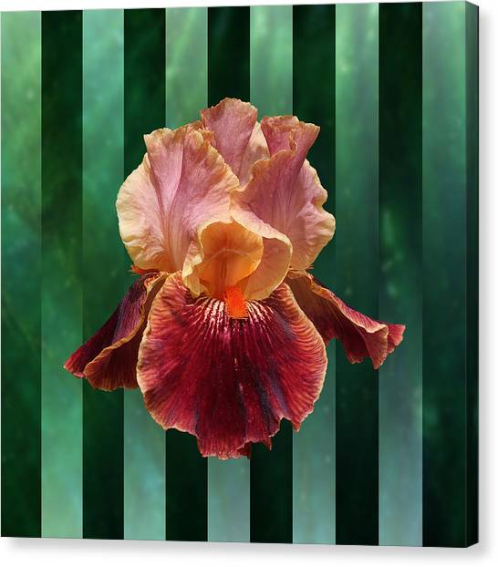 Iris Unleashed Canvas Print