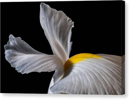 Iris Wings Canvas Print
