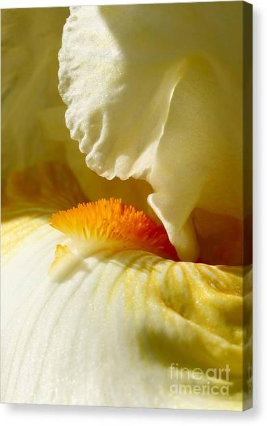 Iris With Touch Of Orange Canvas Print