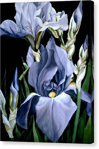 Irises In Blue Canvas Print by Alfred Ng