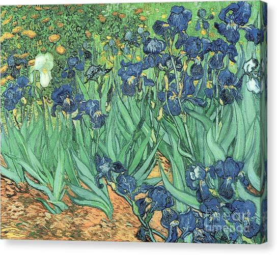 Gardens Canvas Print - Irises by Vincent Van Gogh