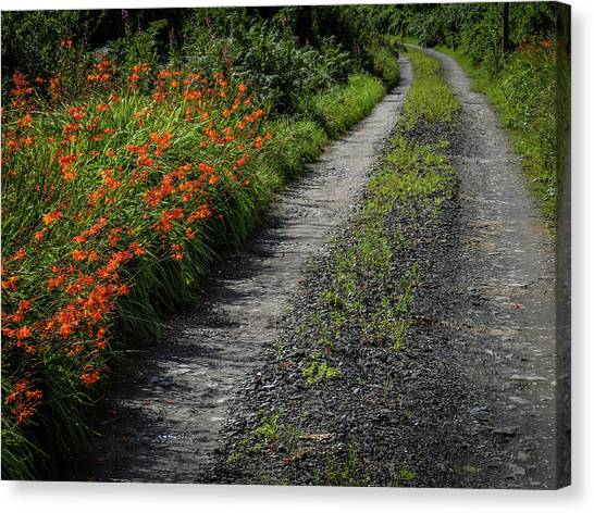 Canvas Print featuring the photograph Irish Country Road Lined With Wildflowers by James Truett