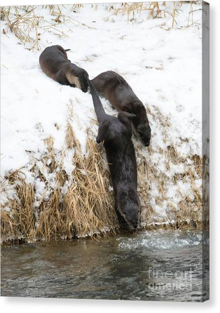 Otters Canvas Print - Is It Cold by Mike Dawson