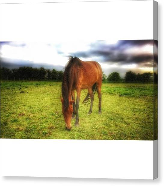 Ponies Canvas Print - Isabellashores.com #horse #equine by Isabella Shores