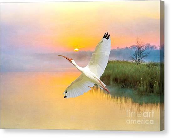 Ibis Canvas Print - Island Ibis by Laura D Young