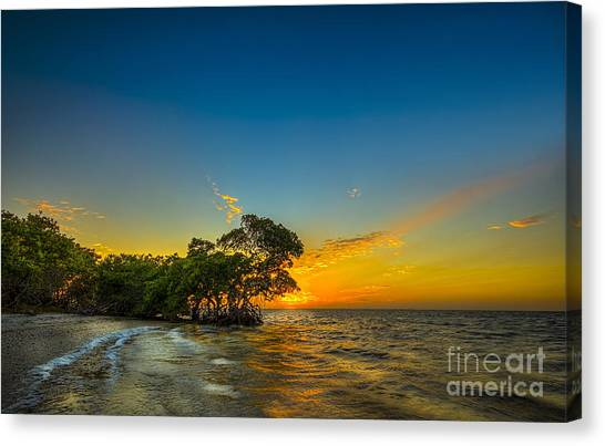 Tampa Bay Rays Canvas Print - Island Paradise by Marvin Spates