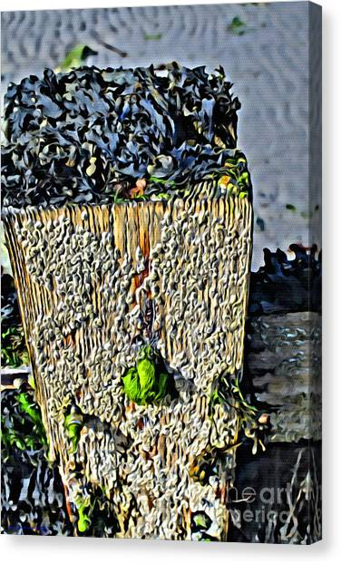 Isle Of Man Low Tide Canvas Print