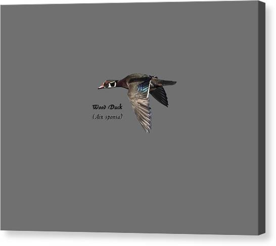 Isolated Wood Duck 2017-1 Canvas Print
