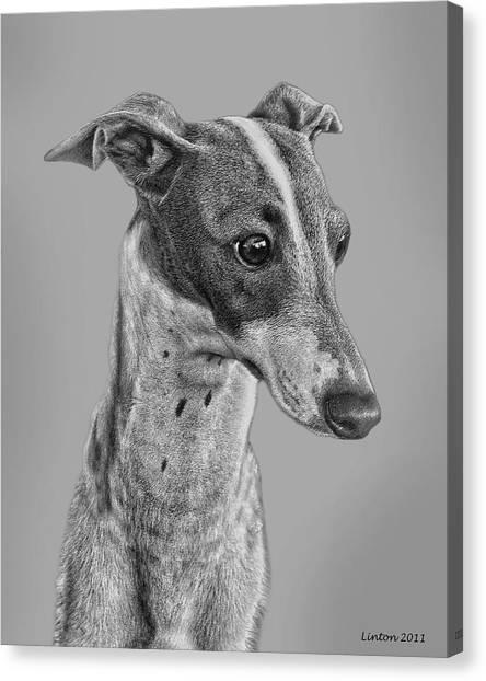 Italian Grayhound 2 Canvas Print