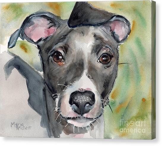 Watercolor Pet Portraits Canvas Print - Italian Greyhound Watercolor by Maria's Watercolor