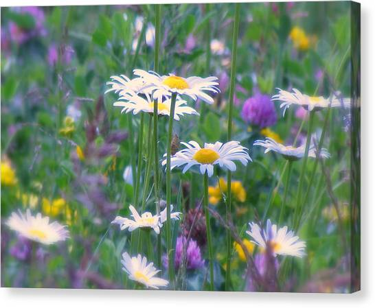 It's A Daisy Kind Of Day Canvas Print