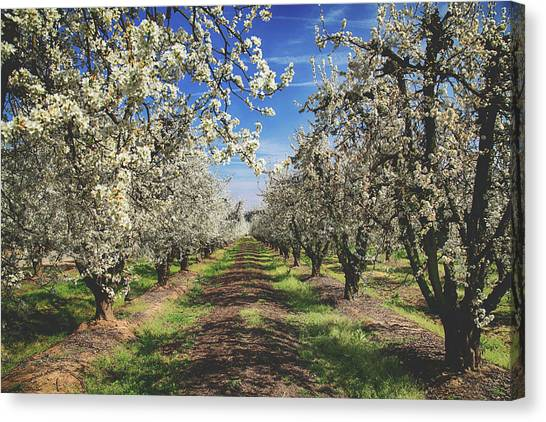 Fruit Trees Canvas Print - It's A New Day by Laurie Search